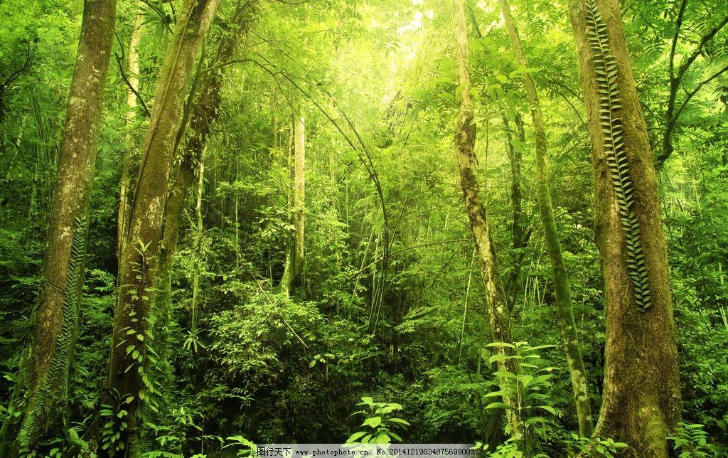 茂密森林 森林 绿色森林 热带雨林 大自然 清晰空气 树林 摄影 自然图片