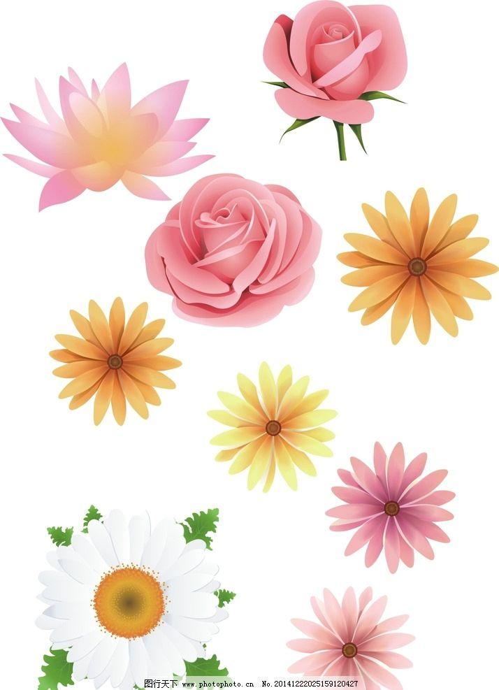 矢量花朵 手绘素材 矢量素材 各种花朵 花藤 盛开 绽放 可爱