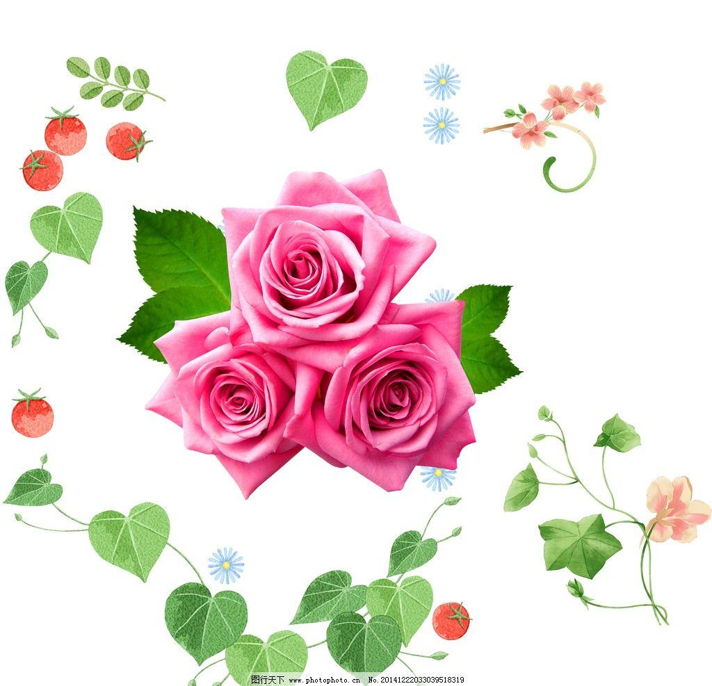 玫瑰花 花朵图片,手绘花朵素材 手绘插图 手绘素材-图