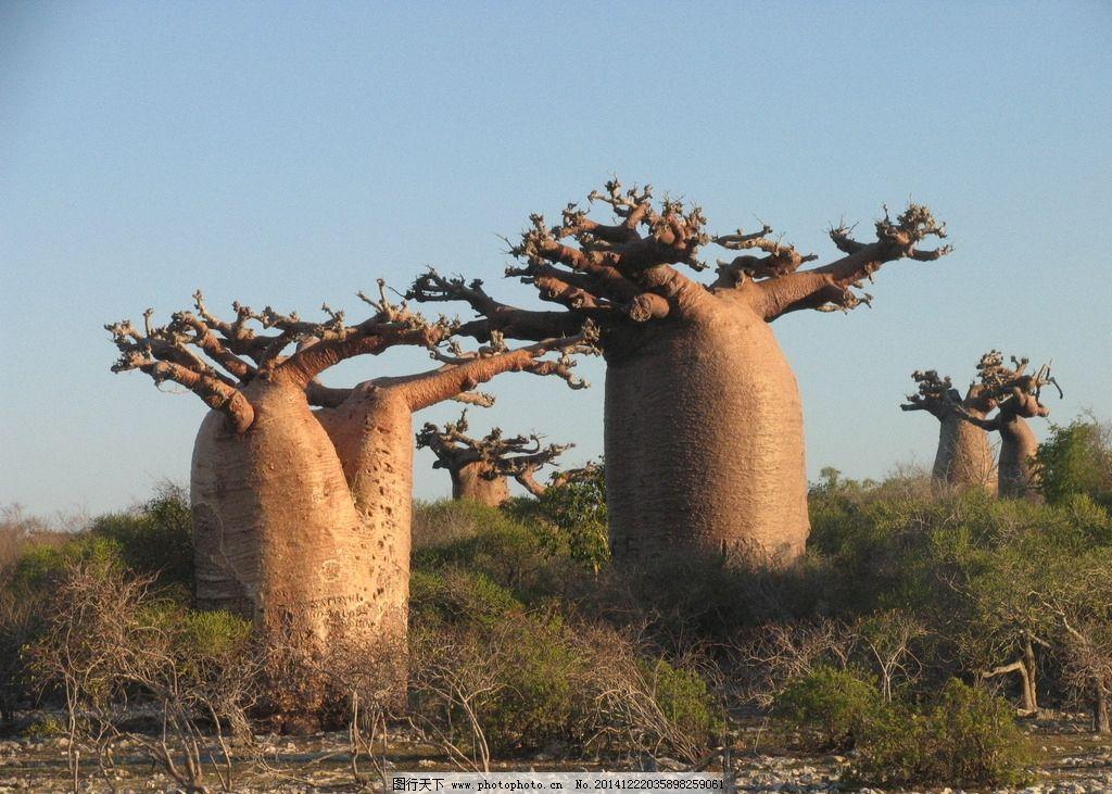 唯美 清新 自然 植物 树 面包树 摄影 生物世界 树木树叶 180dpi jpg