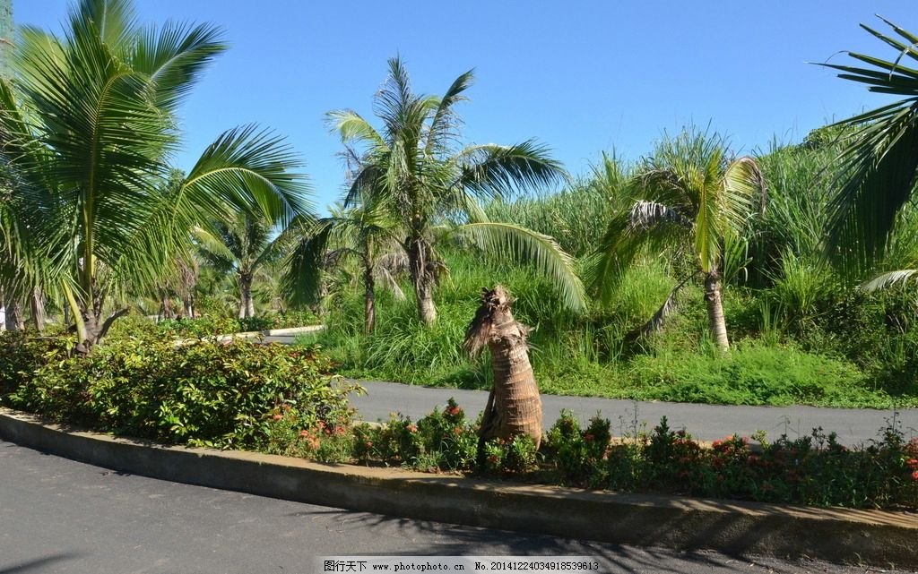 海南风光 椰子树 景观大道 草坪 花圃 摄影 自然景观 其他 300dpi jp