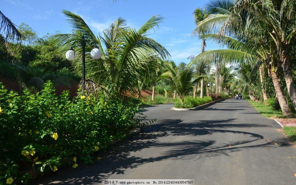 海南风光 椰子树 景观大道 草坪 花圃 景观大道 摄影 自然景观 其他