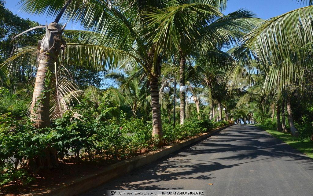 海南风光 椰子树 景观大道 草坪 花圃 园林景观 摄影 自然景观 其他