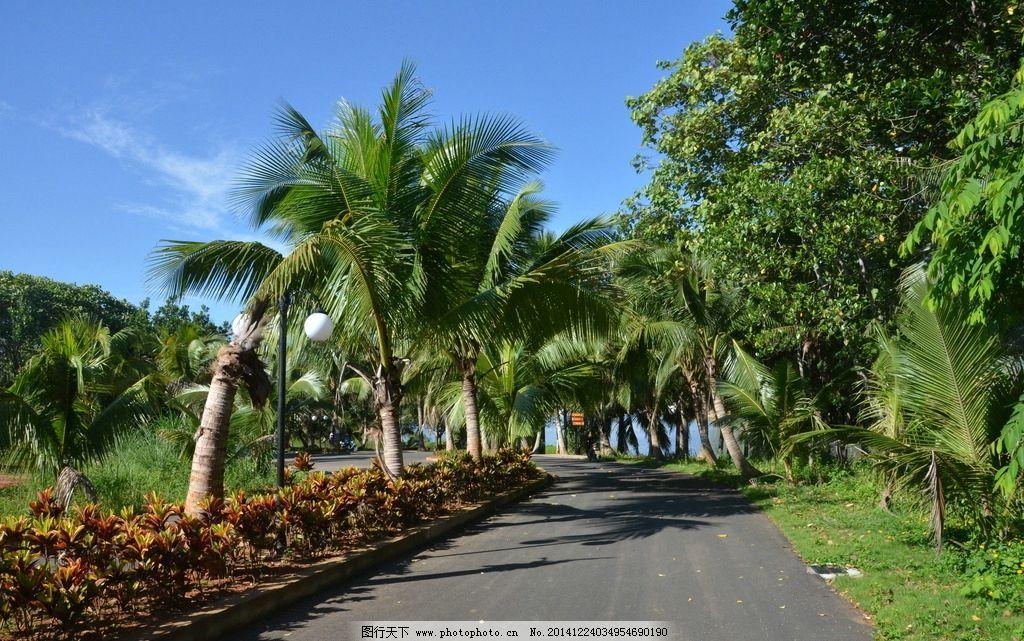 景观大道 海南风光 椰子树 草坪 花圃 摄影