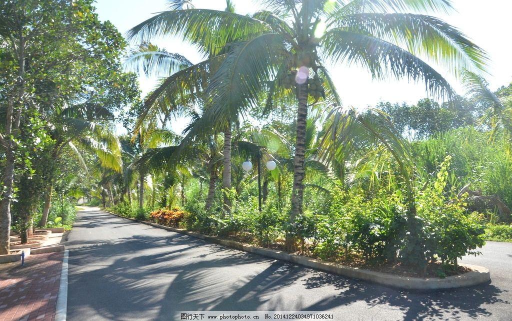海南风光 椰子树 景观大道 草坪 花圃 自然风光 摄影 自然景观 其他