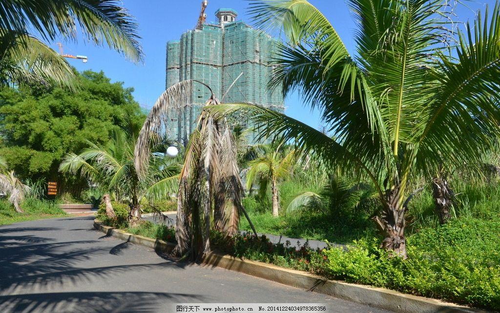 海南风光 椰子树 景观大道 草坪 花圃 景观大道 摄影 自然景观 其他 3