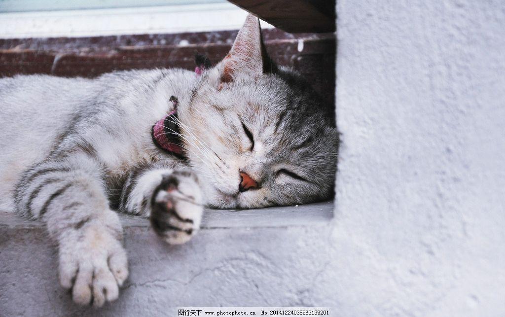 小猫图片,睡觉 懒洋洋 萌 宠物 西塘人家 动物 生物