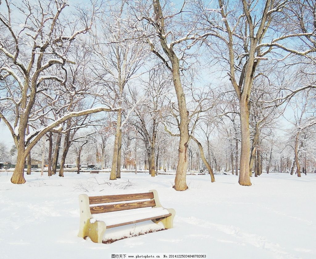 雪景 森林 树林 雪松 树木 冬天公园 白雪 冬季风光 雪地 摄影
