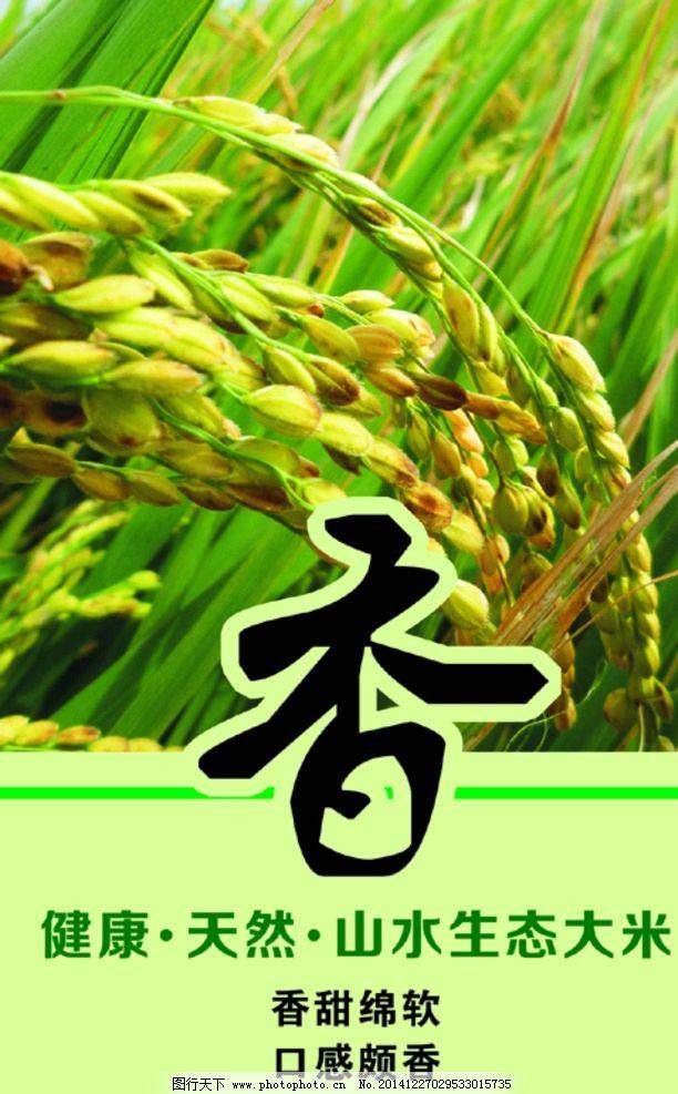 稻子 香 大米 绿色背景 庄稼 设计 广告设计 广告设计 cdr