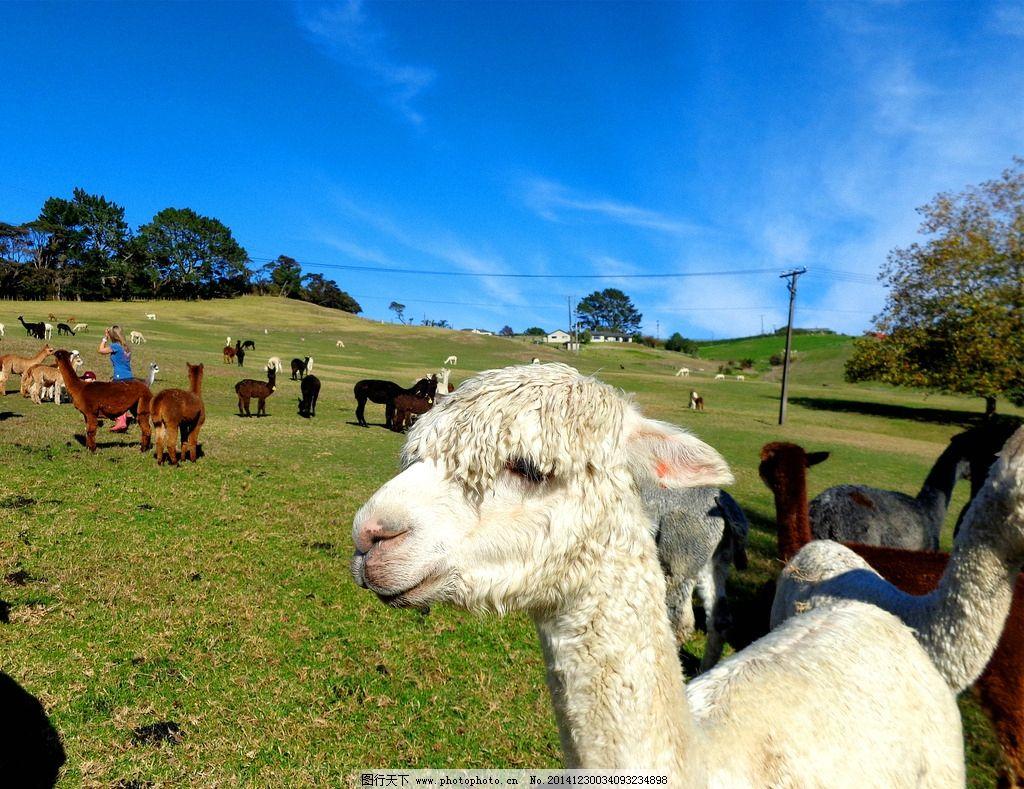 国外牧场的动物