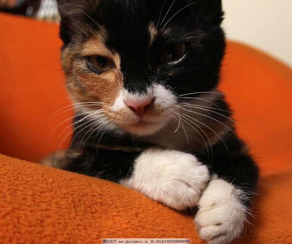 壁纸 动物 猫 猫咪 小猫 桌面 1024_857