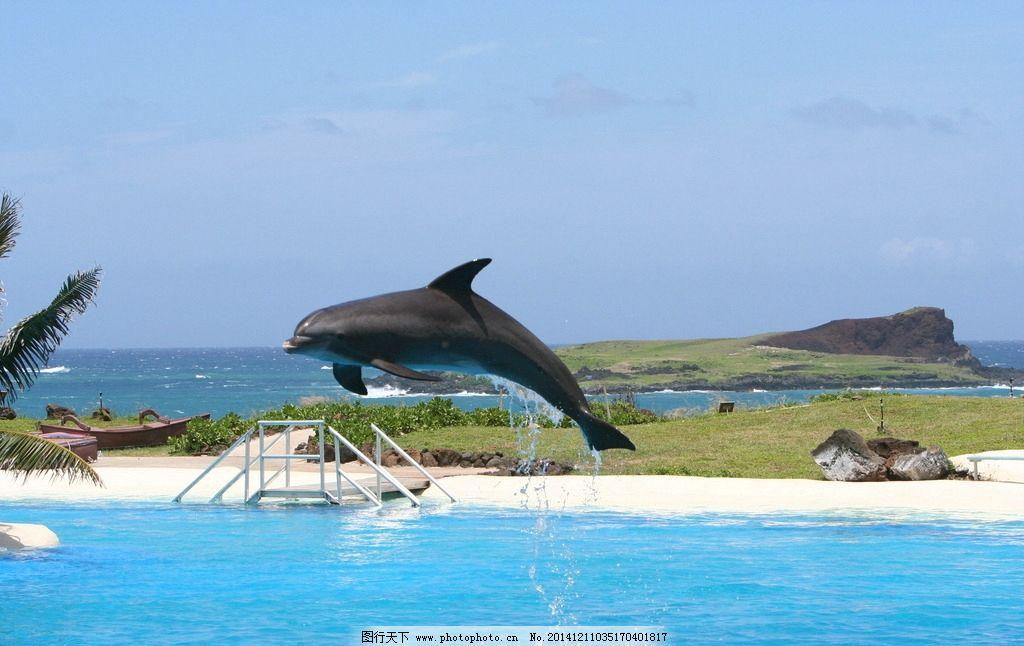 海豚,可爱,聪明,海洋生物,海豚摄影,海豚图片,海豚素材